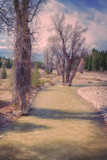 River Trees, Grand Teton Photographic Print by Vincent James