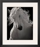 The Lusitano Dancer Posters by Robert Dawson