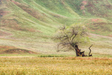 Old Gnarly Tree at the Foot of the Hills Photographic Print by Vincent James