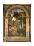 Adoration of the Child, C.1490 Giclée-tryk af Bernardino di Betto Pinturicchio