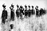 Bringing in the Jyuala to Town, C.1895 Photographic Print by  South African Photographer
