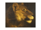 Head of a Lioness Giclee Print by Théodore Géricault