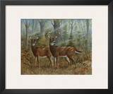 Deer Family II Prints by Ron Jenkins