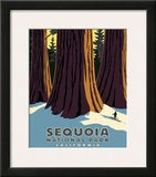 Sequoia Framed Giclee Print by Steve Forney