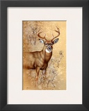 White Tailed Deer Art by Judy Gibson