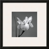 Iris I Framed Giclee Print by Tom Artin