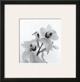 Orchid Spray II Framed Giclee Print by Tom Artin