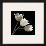 Three Tulips Framed Giclee Print by Michael Harrison