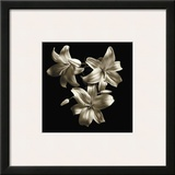 Three Lilies Framed Giclee Print by Michael Harrison
