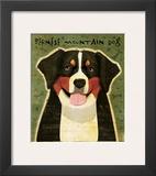 Bernese Mountain Dog Framed Giclee Print by John Golden