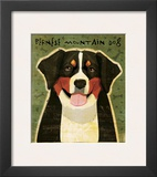 Bernese Mountain Dog Framed Giclee Print by John W. Golden