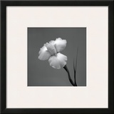 Iris II Framed Giclee Print by Tom Artin