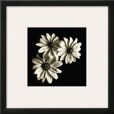 Three Black-Eyed Susans Framed Giclee Print by Michael Harrison