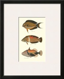 Tropical Fish IV Posters by Georges Cuvier