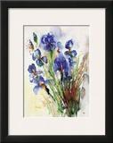 Iris Print by J. Hammerle