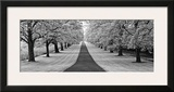 Maple Lined Road Prints by Dennis Frates