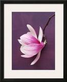 Magnolia Print by Amelie Vuillon