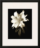Portrait in White I Prints by John Rehner