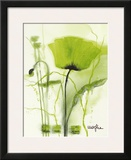 Coquelicot Vert II Posters by  Marthe