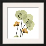 Nasturtium Bouquet Prints by Albert Koetsier