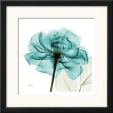 Teal Rose Prints by Albert Koetsier