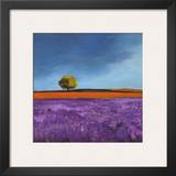 Field of Lavender Prints by Philip Bloom