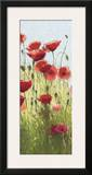 Mountain Poppies I Print by Shirley Novak