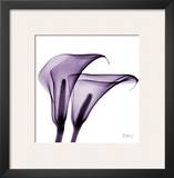 Violet Calla Twins II Prints by Albert Koetsier