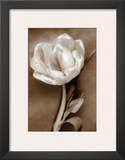 Tulip Prints by Christine Zalewski