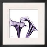 Violet Calla Twins Print by Albert Koetsier