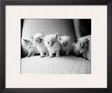 Five Kittens Prints by Kim Levin