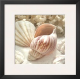 Coral Shell II Prints by Donna Geissler