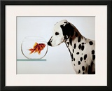 Dalmation Dog Looking at Dalmation Fish Prints by Michel Tcherevkoff