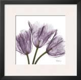 Tulips Purple Trio Posters by Albert Koetsier
