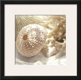 Coral Shell I Print by Donna Geissler