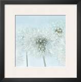 Dandelion I Posters by Kevin Twomey