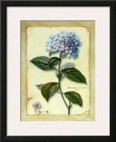 Hortensia Prints by Cesano Boscone