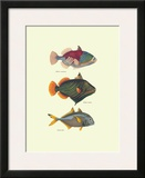 Tropical Fish Art by Georges Cuvier