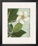 Botanique Bleu III Prints