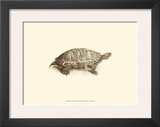 Sepia Turtle I Posters by J. H. Richard