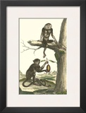 Macaque and Douc Monkeys Art by Denis Diderot
