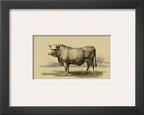 Antique Cow I Prints by Julian Bien
