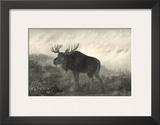 American Moose Poster by R. Hinshelwood
