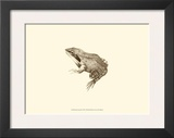 Sepia Frog III Prints by J. H. Richard