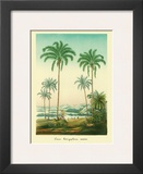 Coconut Palm Trees, 1854 Prints by Ch. Lemaire