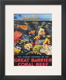 Great Barrier Coral Reef c.1933 Prints by Frederick Phillips