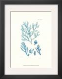Shades of Aqua IV Prints