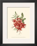 Flowering Shrub II Art by  Edmonston & Douglas
