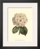 Pastel Blooms III Posters by Samuel Curtis