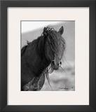 Wild Stallion II Art by Claude Steelman